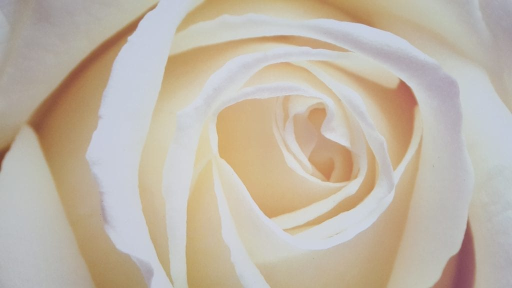Clear Medical therapy rose picture